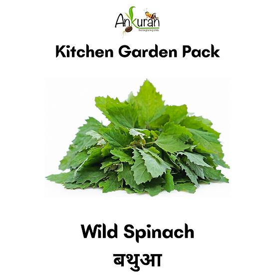 Wild Spinach (बथुआ)