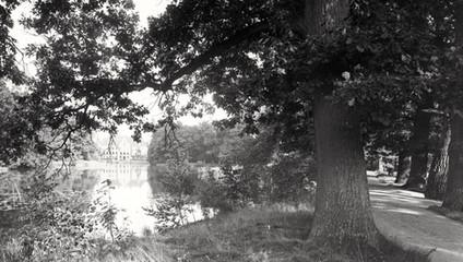 Ach, gdzie te dawne aleje parkowe ... ta przejrzystość i porządek. (Kopice około roku 1930)