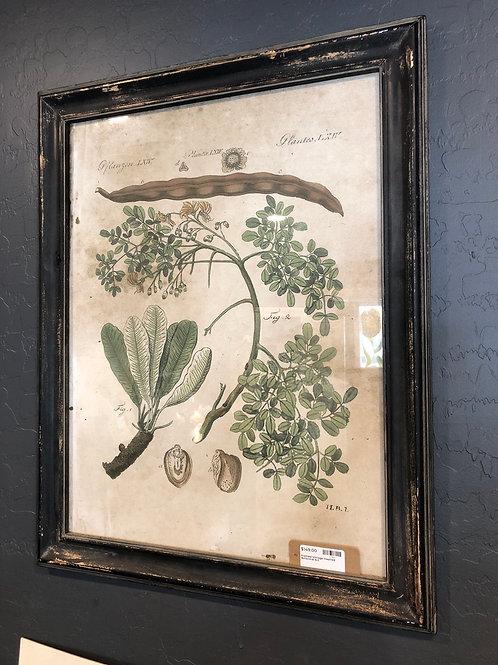 Framed botanical art