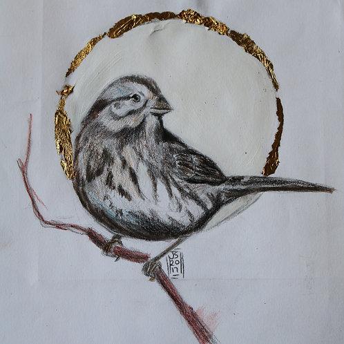 Unique sparrow