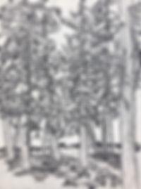 trees in mazama_edited.jpg