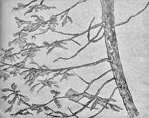 Pine outside cabin