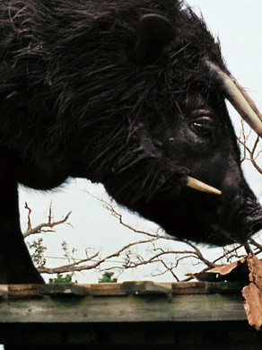 Beasts of the Southern Wild: A Look at Emotion, Lighting, and Sound