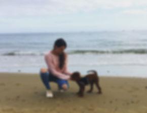 start pet sitting dog walking business.J