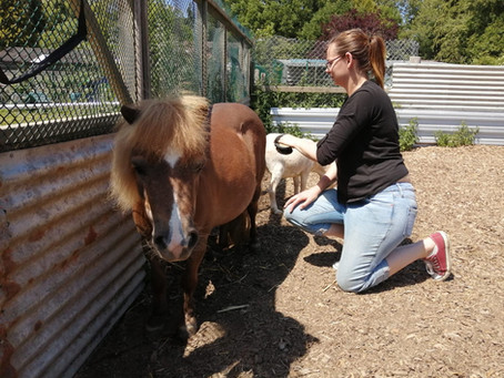 A Day in the Life of…a Holbrook Animal Rescue Volunteer – Part 1 by Theresa Smith