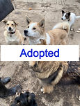 Star & Toffee - To Be Homed Together
