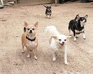 Lily, Tania, Ottie & Maddie