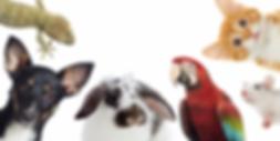 pets-1200x604.png