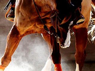 Ligas para cavalos - Atraentes e Importante