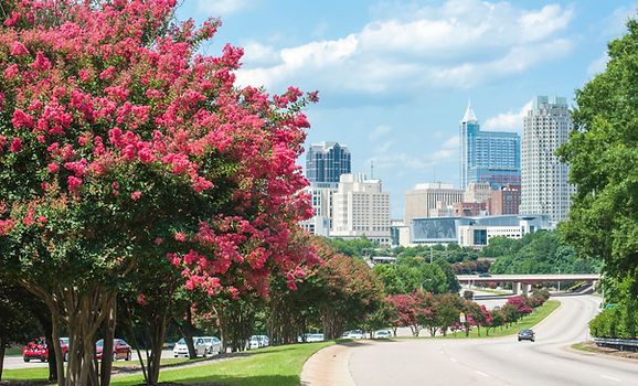 Raleigh skyline in the summer with crepe