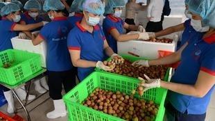 Tạp chí việt nam – Luật sư Pháp và châu Âu tư vấn cho Việt Nam về EVFTA