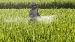 Một đồng lúa ở Châu Sơn, phía nam Hà Nội. Với việc thực hiện hiệp định EVFTA, nông dân Việt Nam sẽ buộc phải dần dần từ bỏ chất hóa học.