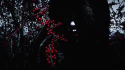 51D bw berries 2