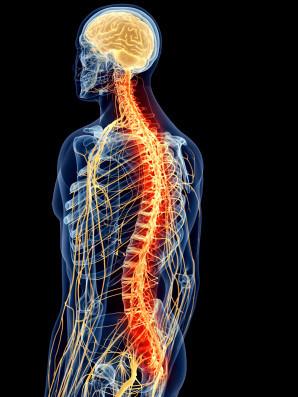conexão mente-corpo
