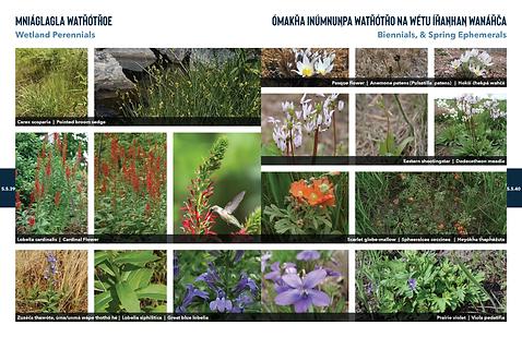 200603 PlantPalette 22.png