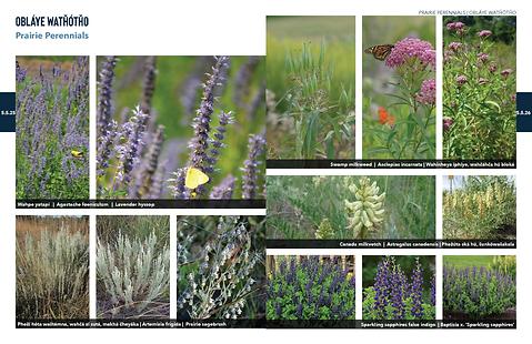 200603 PlantPalette 15.png