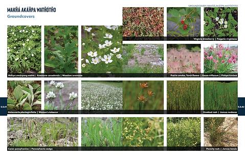 200603 PlantPalette 23.png