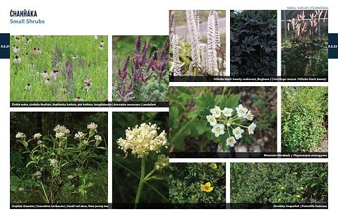 200603 PlantPalette 13.png