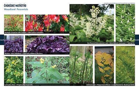 200603 PlantPalette 21.png