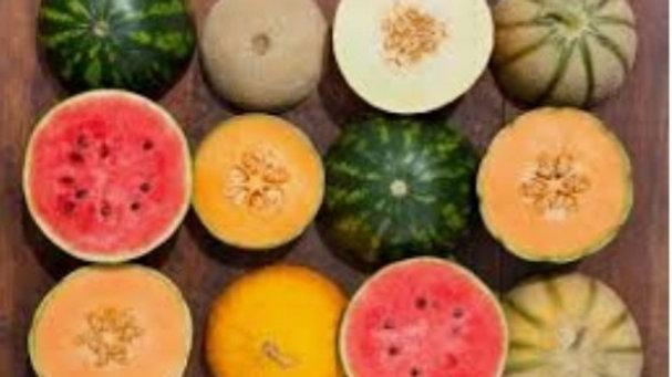 melon x1