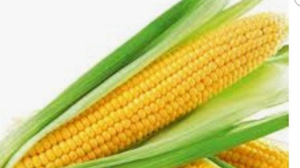 Sweet corn x1
