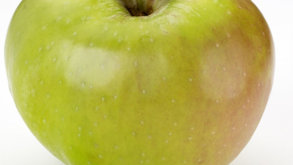 Bramley apple x1