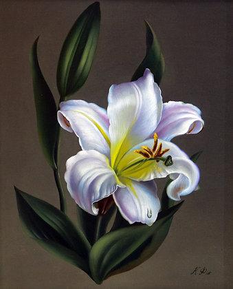Lily, still-life, oil, canvas