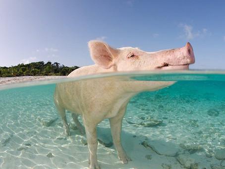 Anarquinópolis, capítulo 13: A audiência do Porco