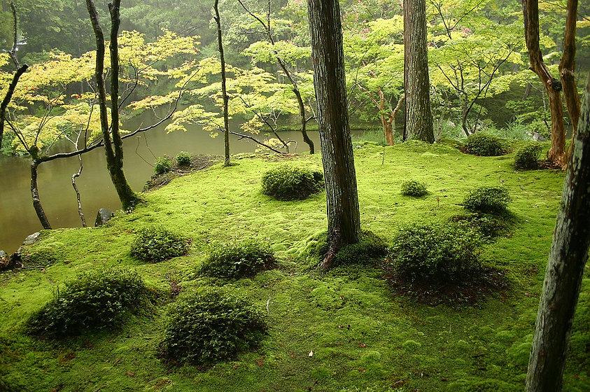shiatsu-metz-terre.jpg