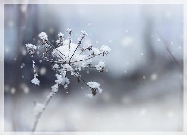 shiatsu-metz-hiver.jpg