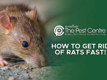 HOW TO GET RID OF RATS FAST