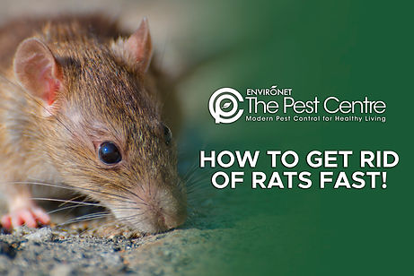 HOW TO GET RID OF RATS FAST!.jpg