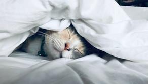 Life Hack: How to Get Better Sleep