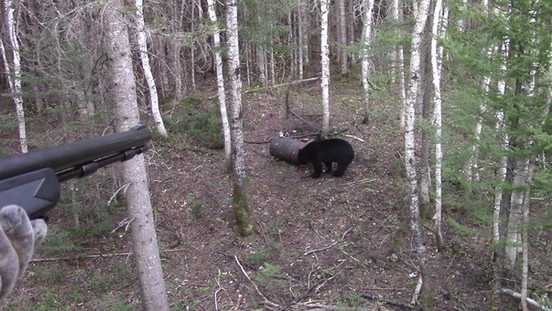 Pourvoirie_Larocheuse_Chasse_Ours 1.jpg