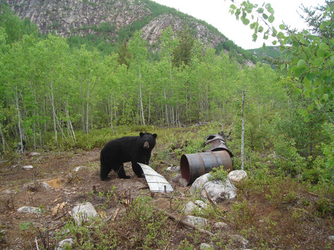 Pourvoirie_Larocheuse_Chasse_Ours_12.jpg