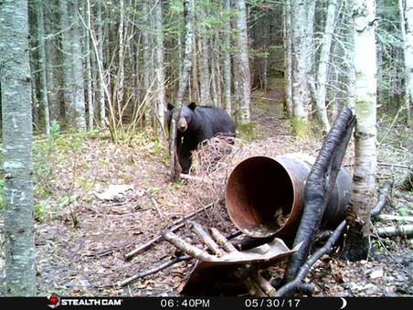 Pourvoirie_Larocheuse_Chasse_Ours_11.jpg