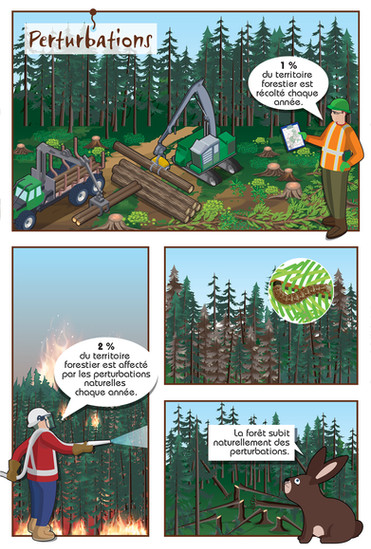 association_forestiere_cote_nord_illustr