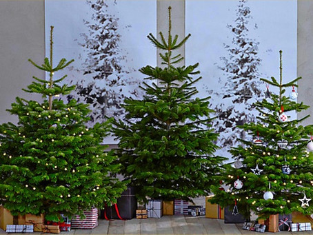 Our fabulous Christmas trees are back!