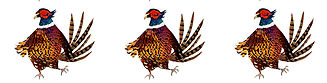 PHEASANT PATTERN SAME WAY.jpg