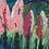 Thumbnail: Pink Trees