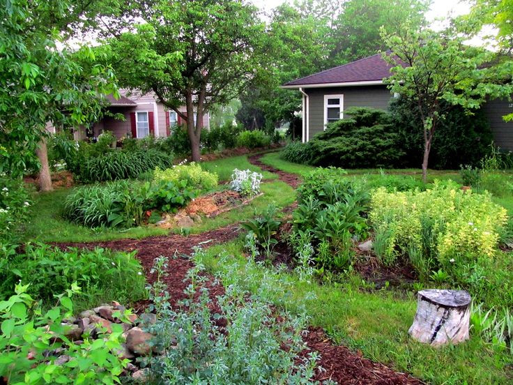 A permaculture yard.