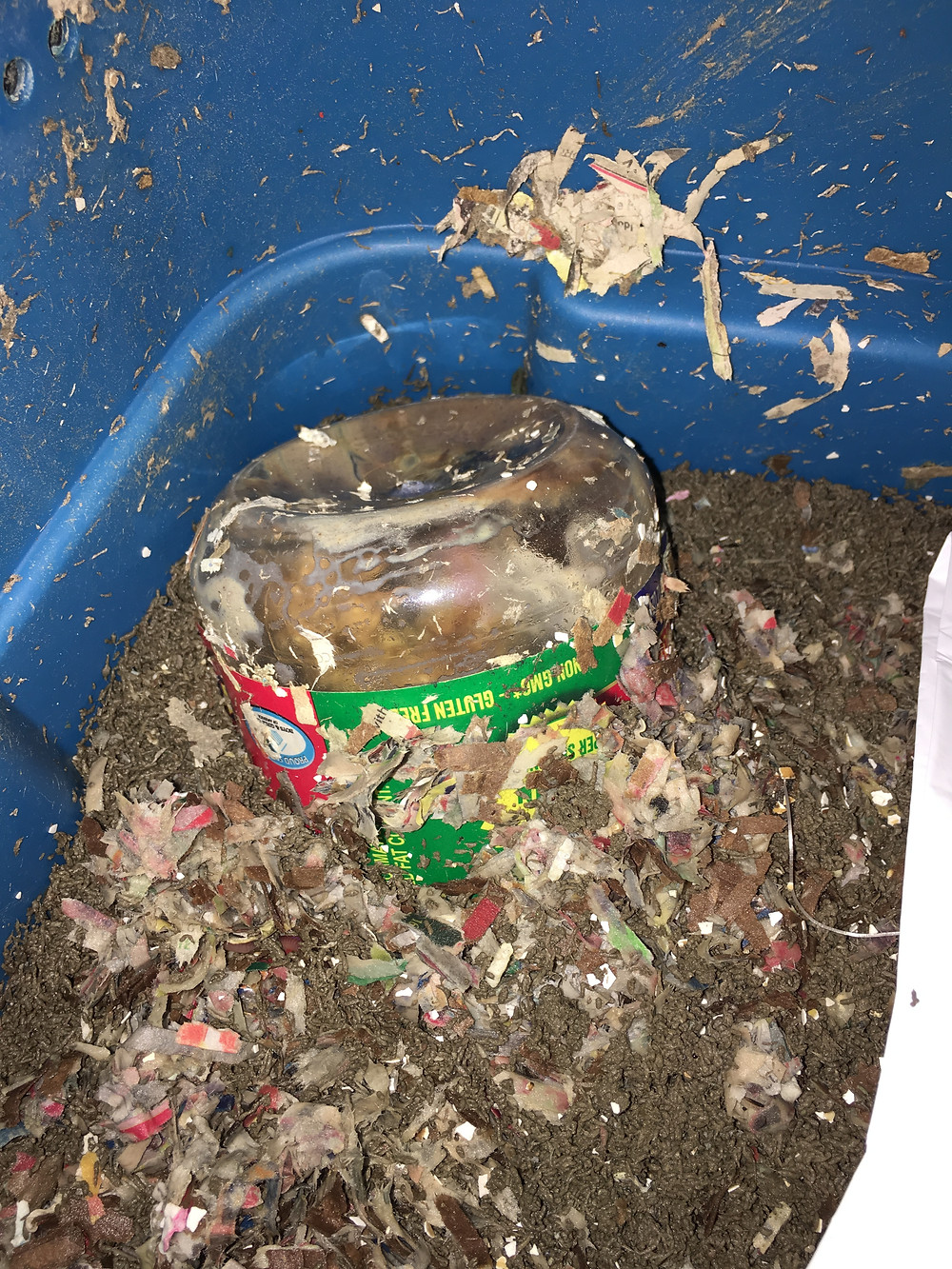 Peanut butter container in the worm bin for the worms to consume