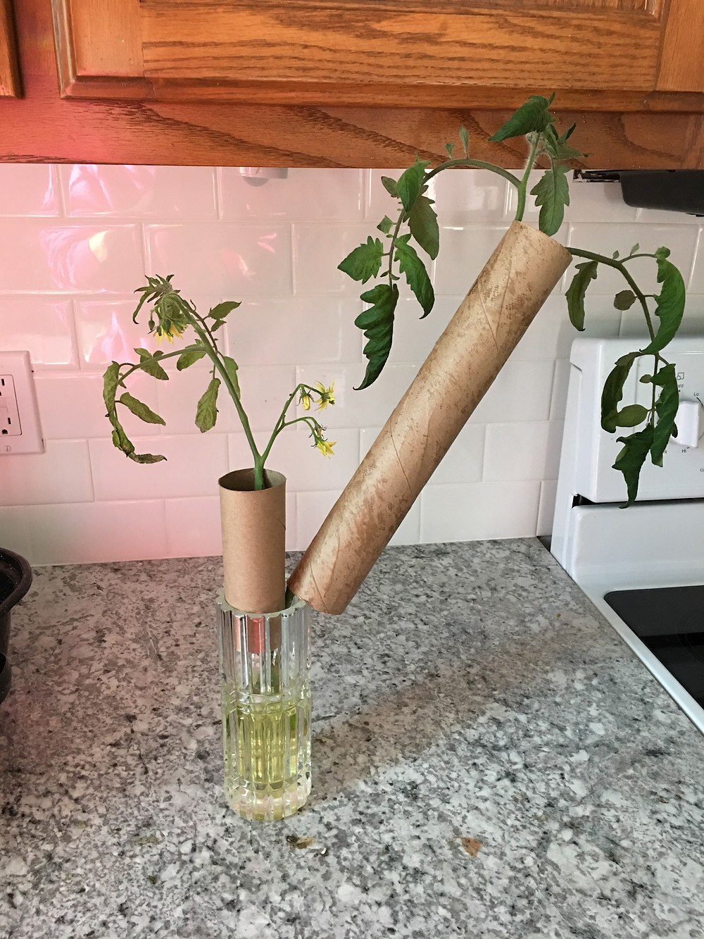 Cardboard recyling Tomato Supports