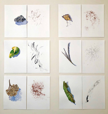 Botanical Object Studies and Strikes