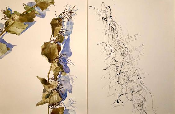 Botanical Study and Strike