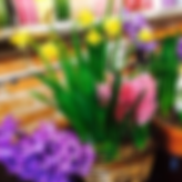 Flower Store in Traer, Iowa