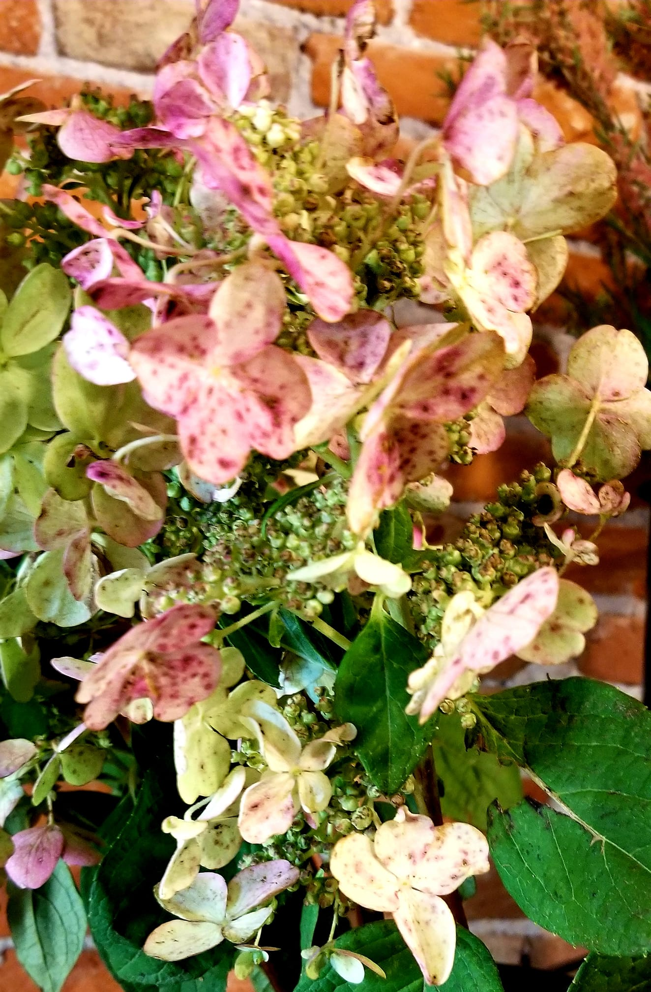 SimplyBlooming_antique hydrangea