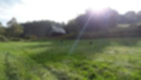 training field.jpg