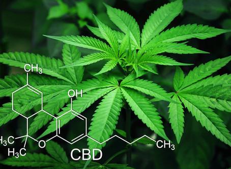 Marijuana extract CBD may be used as a marijuana addiction treatment