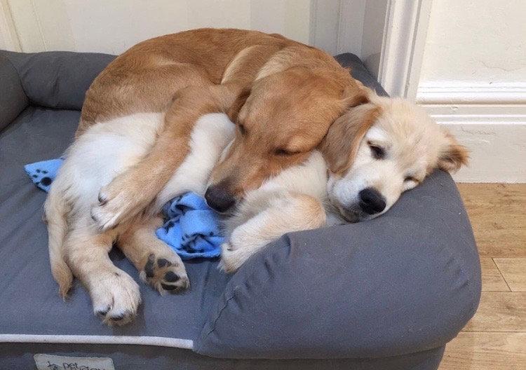 Overnight Dog Sitting
